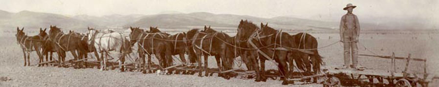 Two Mules + 10 Horse Team, 1890