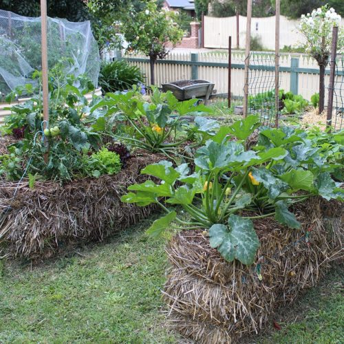 Straw Bale Raised Beds for Vegetables @ Agriculture Museum