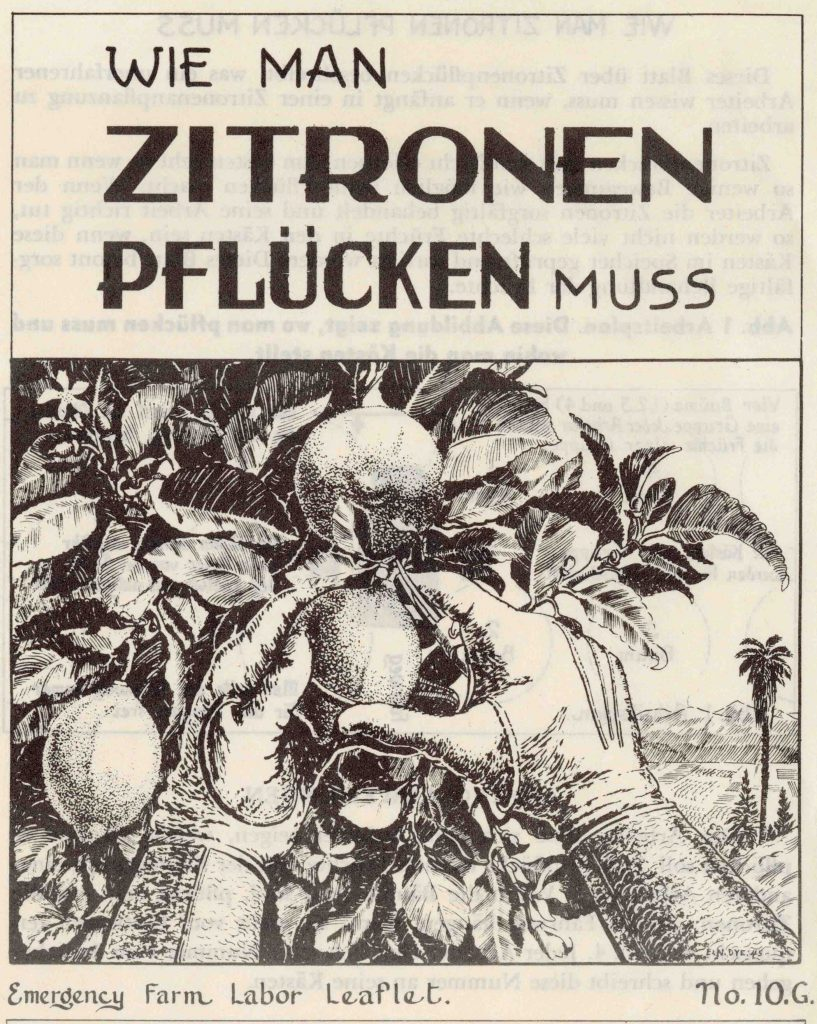 Photo of Flyer Cover – Wie Man Zitronen Pflücken Muss